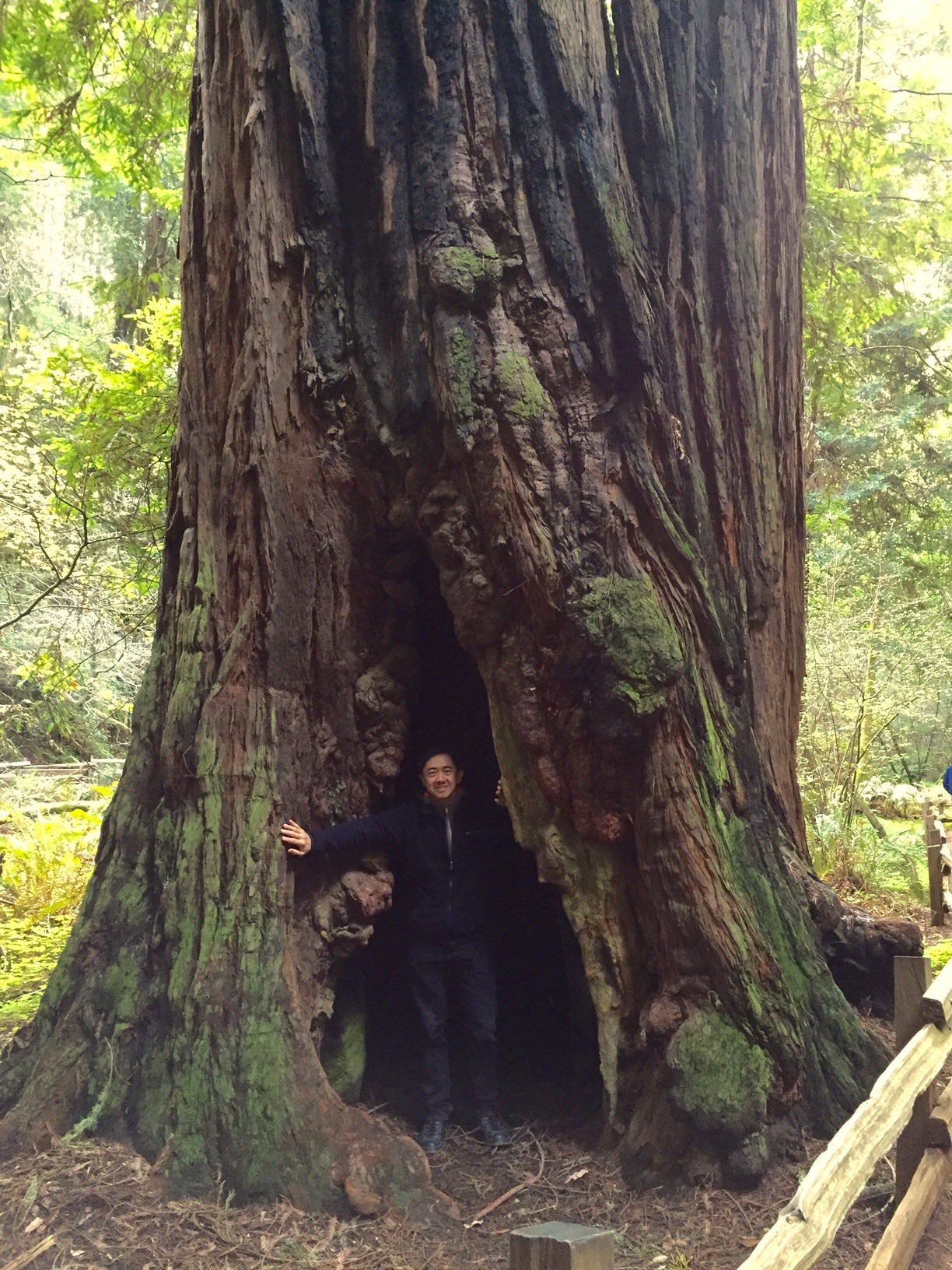 Muir Woods (March 2016)