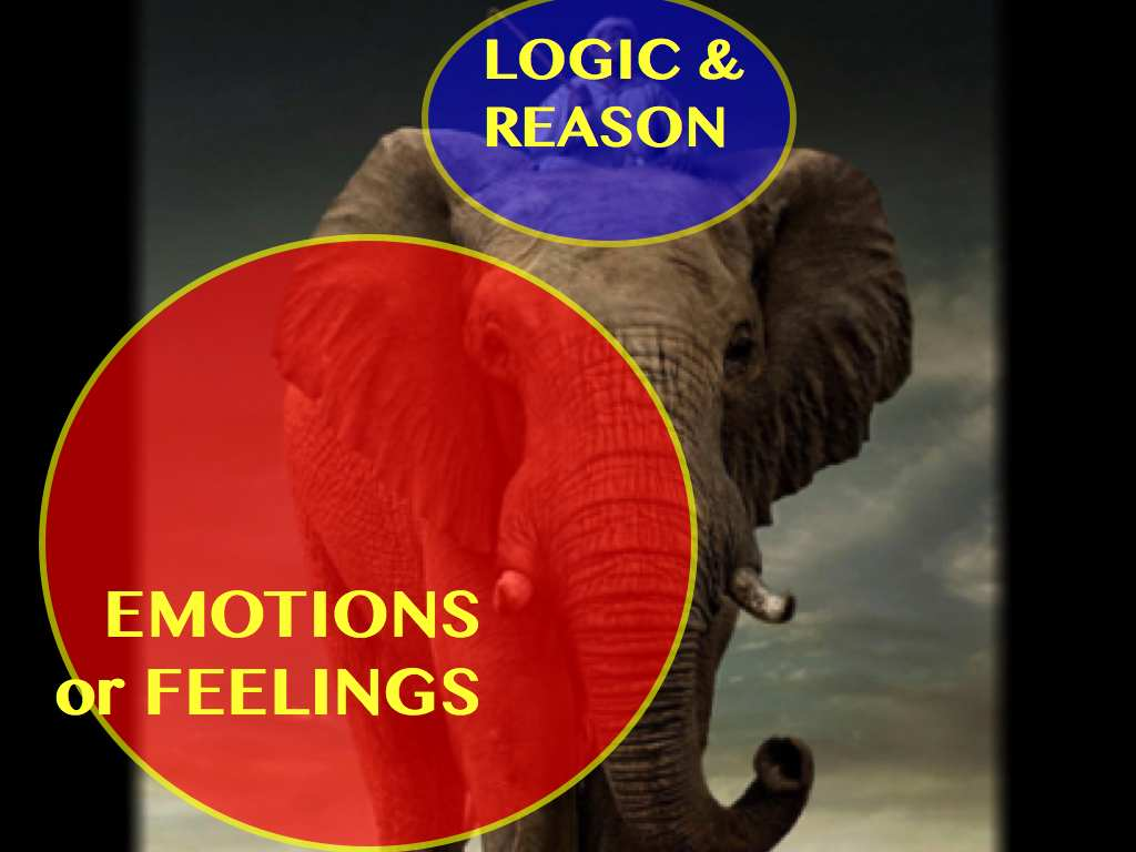 elephant logic emotions.047