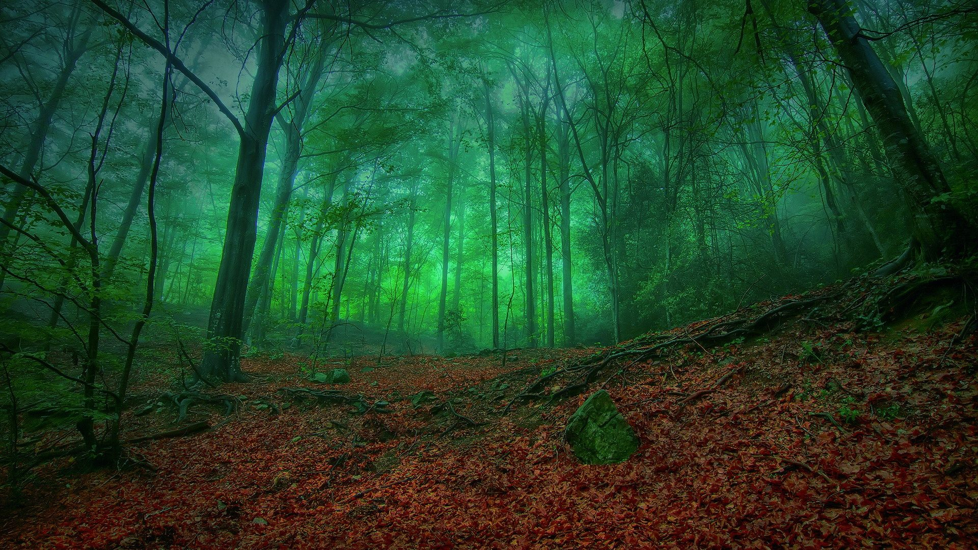 Misty Green Forest Enchantment Nature Leaves Mist Trees Forests Wallpaper For Android